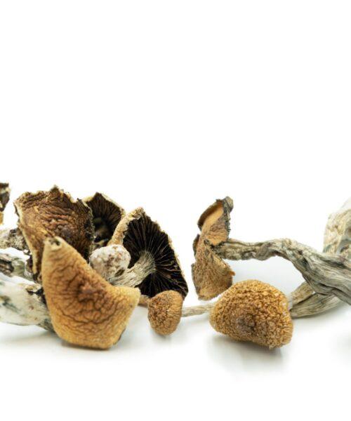 Magic Mushrooms Mix Match