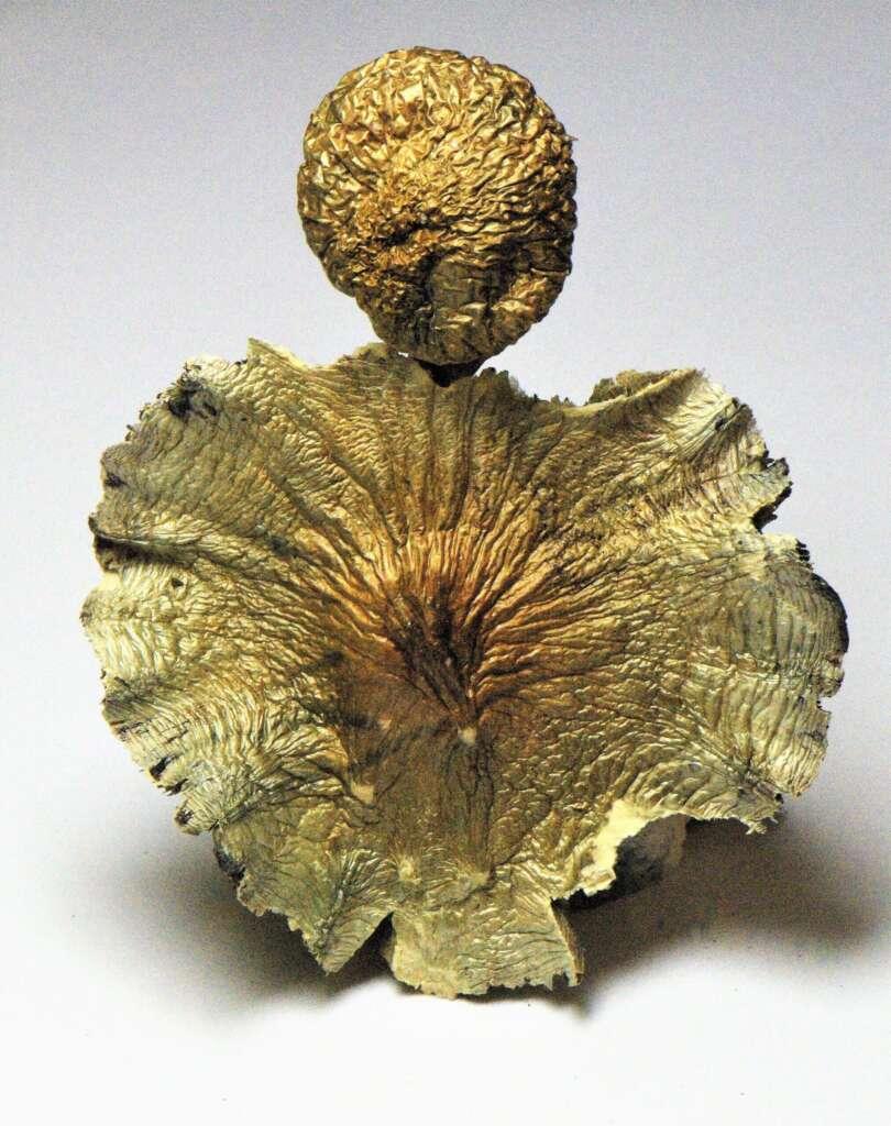 B+ psilocybin mushrooms